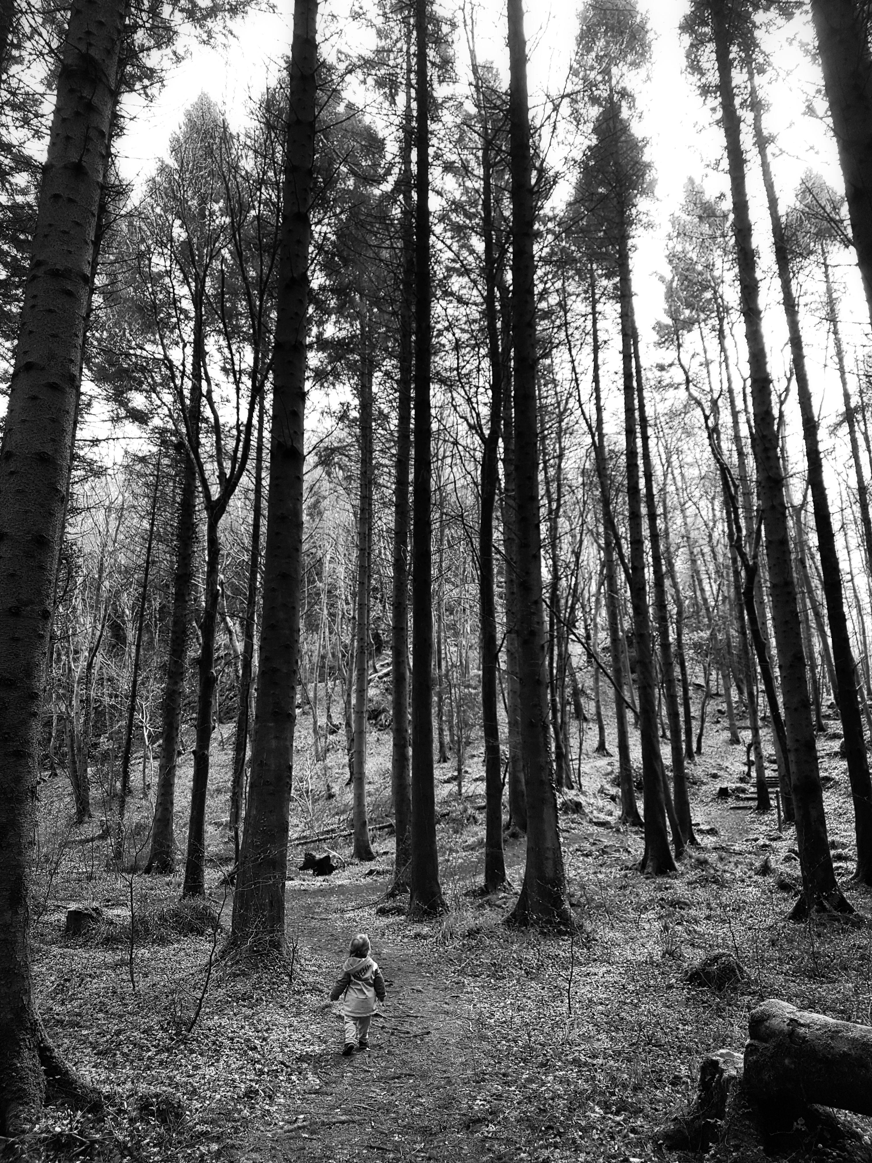Kid wandering through the woods